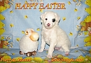 Happy easter - Pazzda kennel
